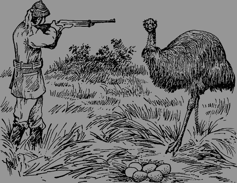 Великая война австралийцев со страусами эму